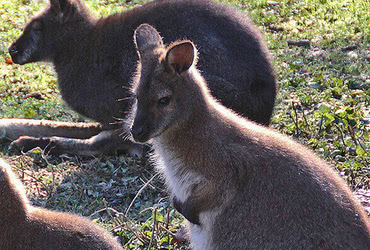 Doppelmayr Zoo / Wolfurt